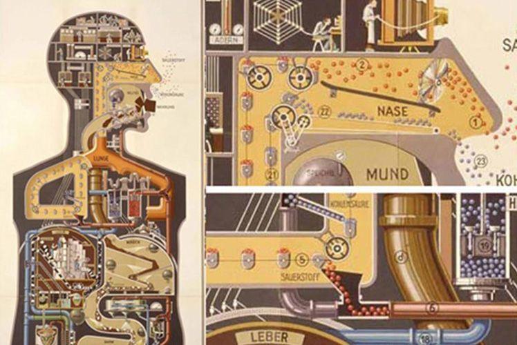 corpo humano uma fabrica
